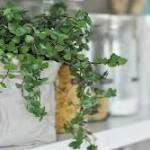 Hechizo de amistad con plantas